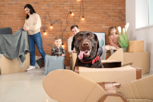 Anwesenheit von Hunden führen nicht zur Versagung des Umgangsrechts mit dem Kind