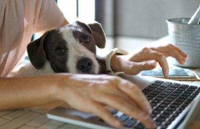 Haustiere als Haushaltsgegenstände – Tragung Tierhaltungskosten